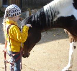 Pferde sind unsere besten Lehrer